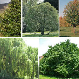 National Tree Week 21 to 27 March 2021